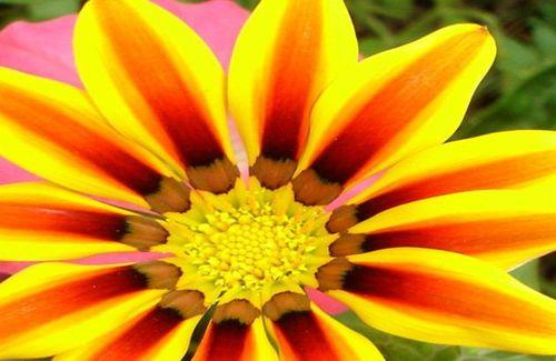FlowerphotoBRIGHT