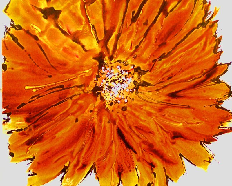 Orangebloom