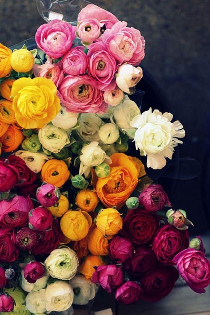 FlowersForHesse