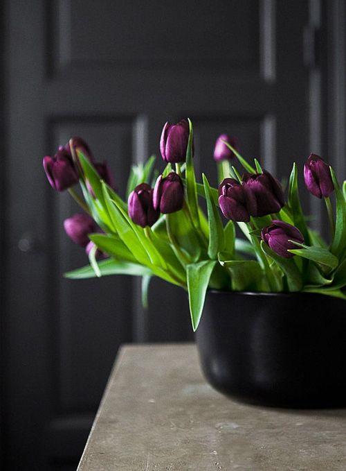 PurpleTulips