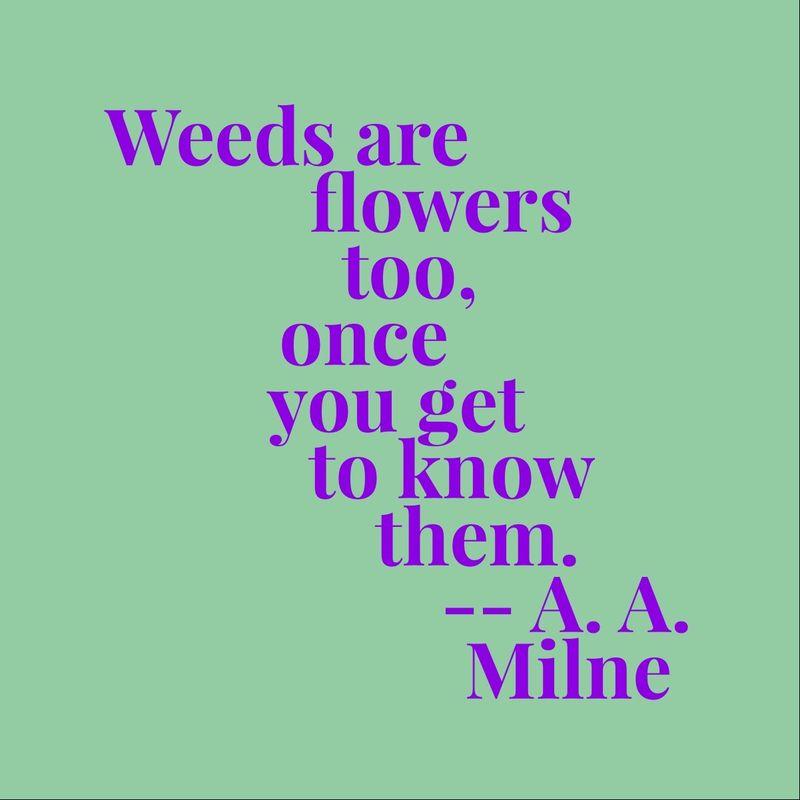 WeedsAreFlowersToo