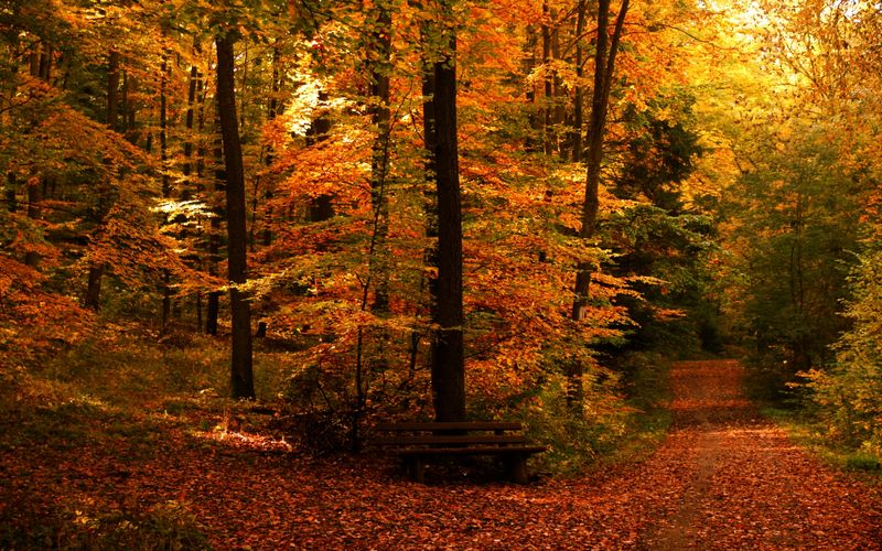 Autumn-free-wallpaper-autumn-path_2560x1600_93126