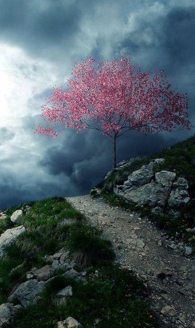 CherryBlossomStoneRoad