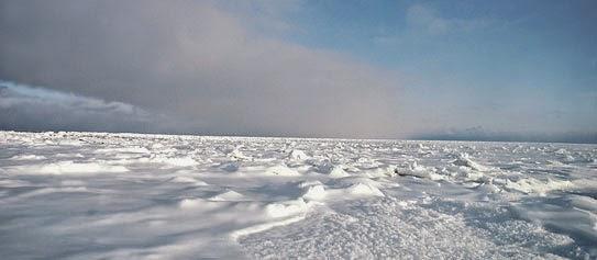 Tundra - Arctic Tundra